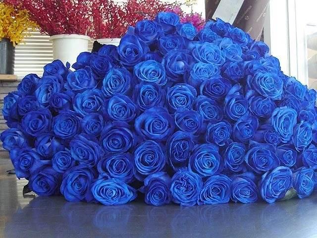 Синие розы — эксклюзивный тренд современности