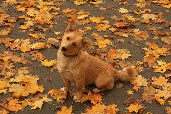 Учимся оберегать своего пса в осенний период